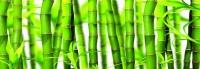 Кухонный фартук Зеленый бамбук
