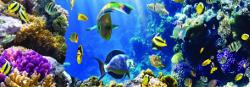 Кухонный фартук Коралловый риф